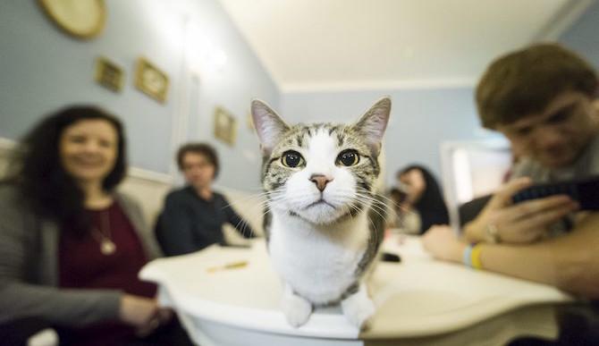 3 Reasons Why Austin Needs A Cat Café