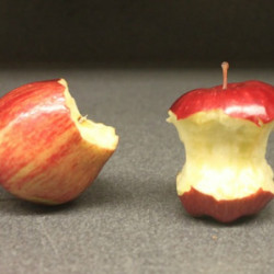 You've Been Eating Apples Wrong Your Whole Life, and Here's Why