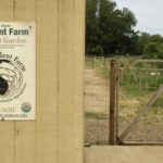 Get Down and Dirty at the UC Davis Student Farm