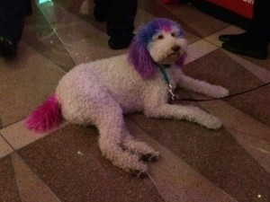 This dog matches just about anything!