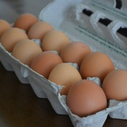 The Truth About Buying Eggs: Decoding Those Confusing Carton Labels