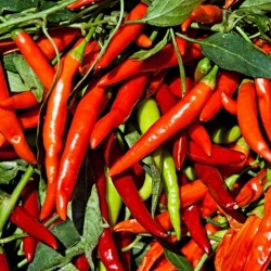 What Loving Spicy Foods Says About Your Personality