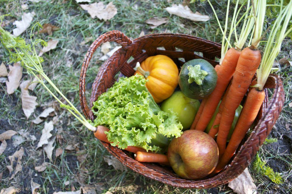 organic family farm
