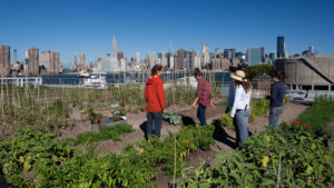 7 Big-City Urban Farms Are Impacting Their Communities in Big Ways