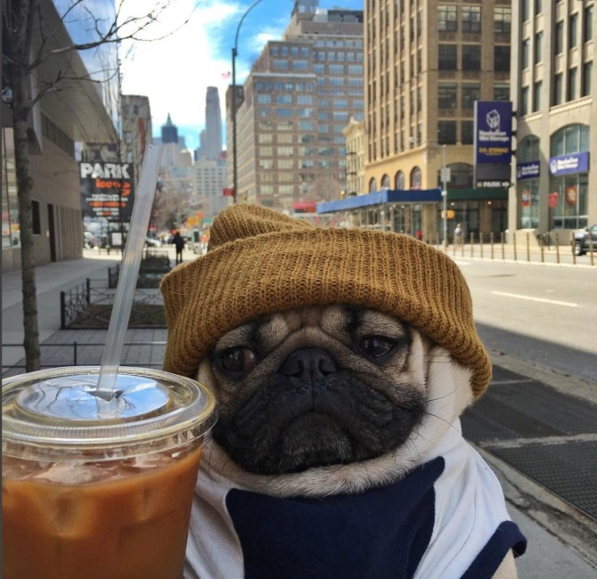 Dough the Pug