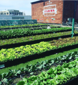 Boston's Fenway Farms Knocks It Out of the Park