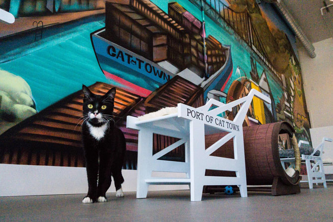 A cat plays at Cat Town Cafe (Photo Credit: Cat Town Cafe & Adoption)