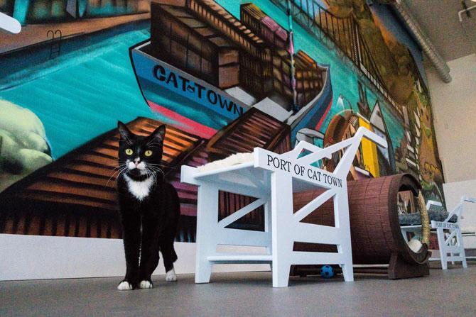 Cat Town Cafe & Adoption)