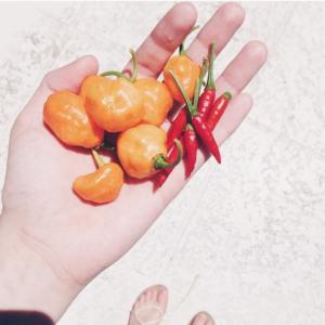 Photo courtesy of @laracr0ftt on Instagram