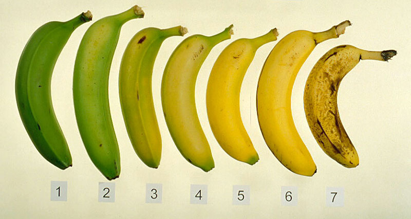 how to keep bananas from ripening too soon