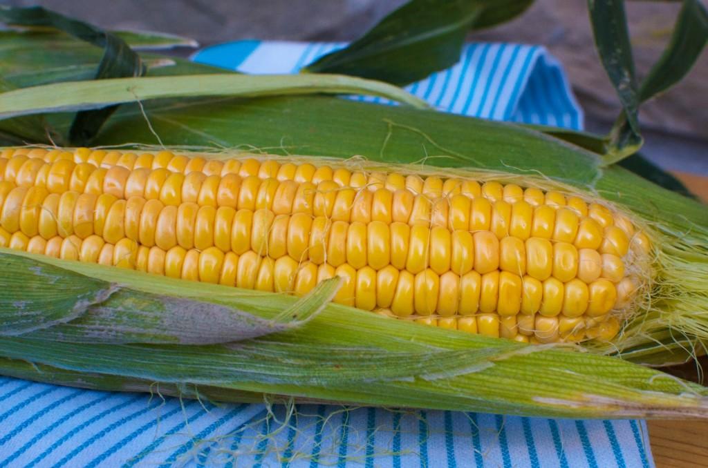 Photo Courtesy of Latavolamarche.blogspot.com