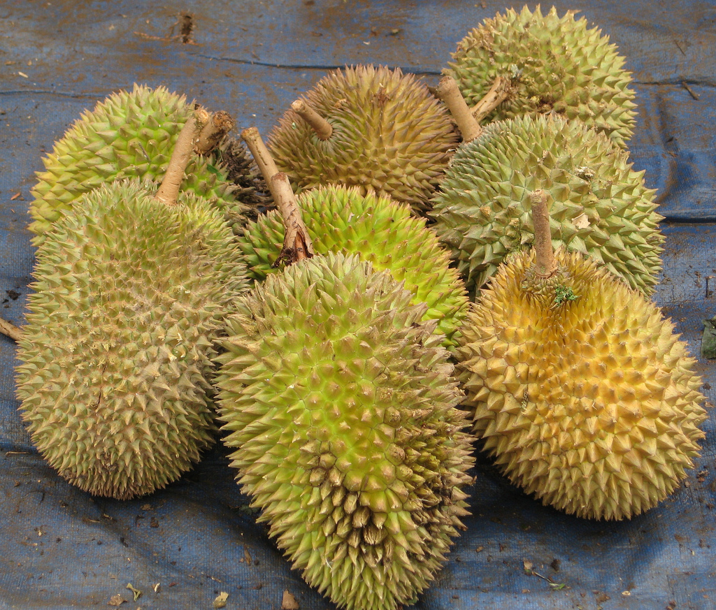 what the hell is durian. Black Bedroom Furniture Sets. Home Design Ideas