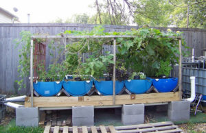 How to Build an Aquaponics Fish Tank at Home