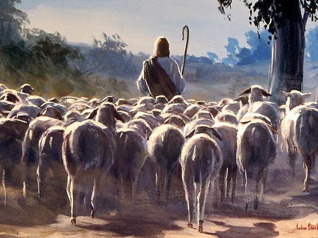 1/10/16 - Shepherds, Shepherding, and the Great Shepherd of the Sheep -  Springs of Grace Bible Church