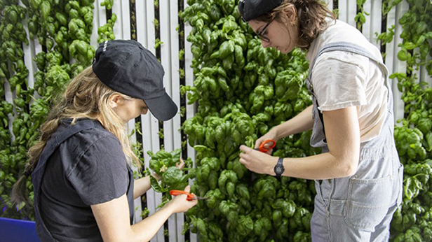 Training the next generation of leaders in the food industry inside Square Roots Farms.