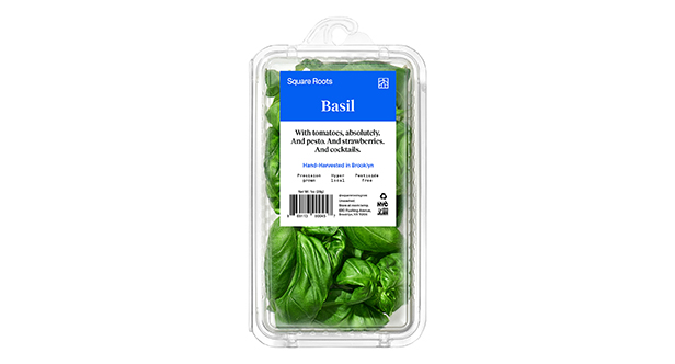 Square Roots packed basil