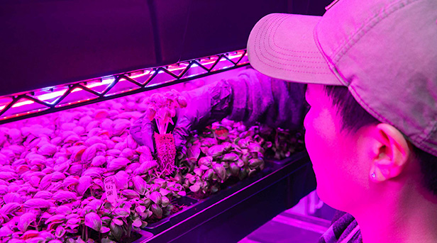 Next-Gen Farmer Micah Helle with basil seedlings.