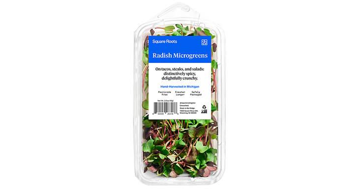 Square Roots Radish Microgreens