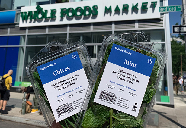 Square Roots hyper-local mint and chives