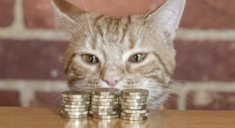 MoneyMog