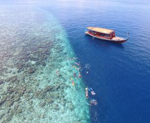 Cocoon Reef Snorkeling