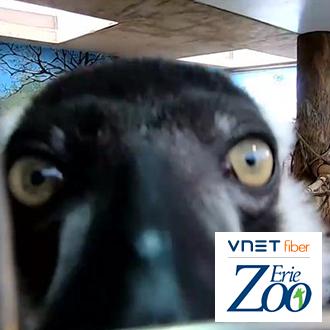 Erie Zoo Live Stream