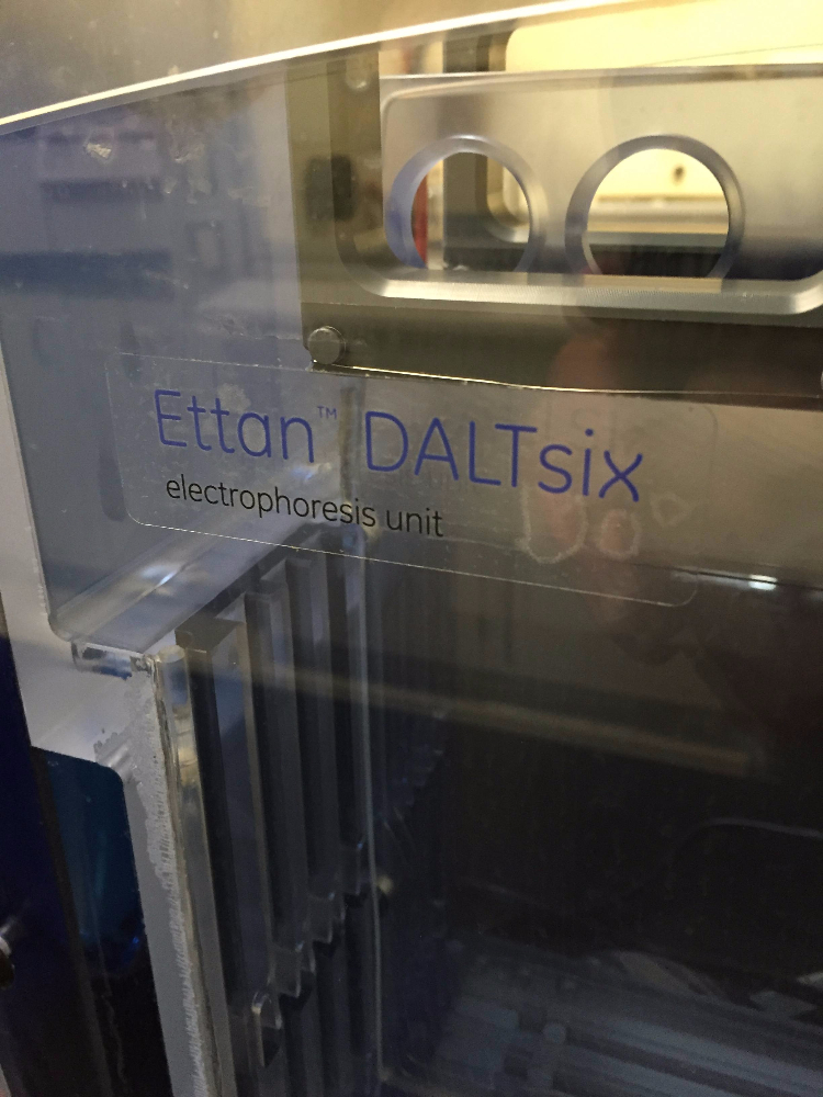 Invitrogen Zoom Dual Power with Ettan DALTsix Electrophoresis Unit