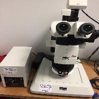 Leica M165FC Microscope