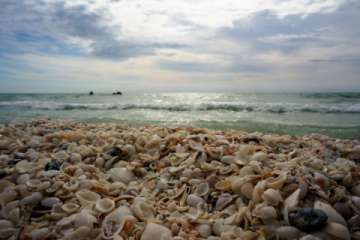 Marco Island is a sheller's paradise!!! (Pic)