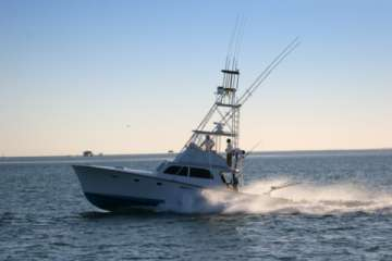 Charter a full or half day deep sea fishing! (Pic)