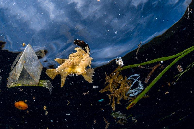 Wildlife photographer of the year, pez basura