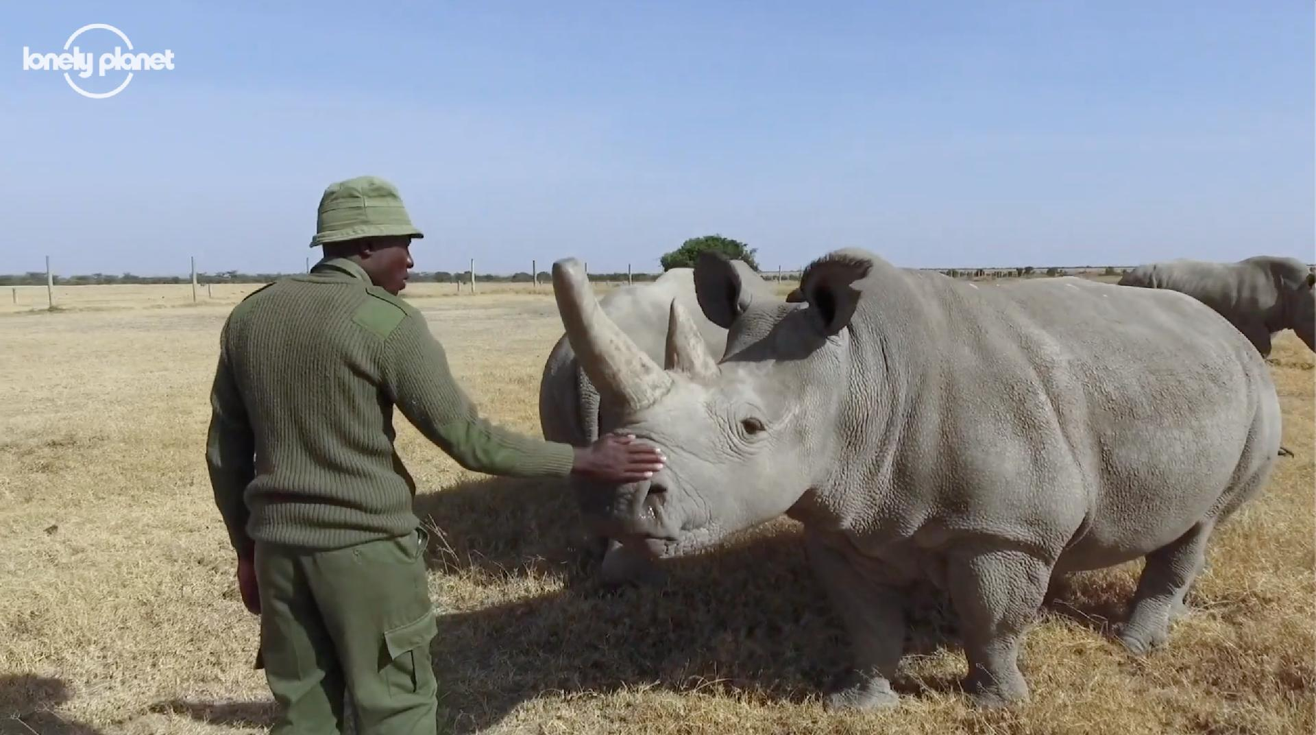 Saving the rhinos during Covid-19