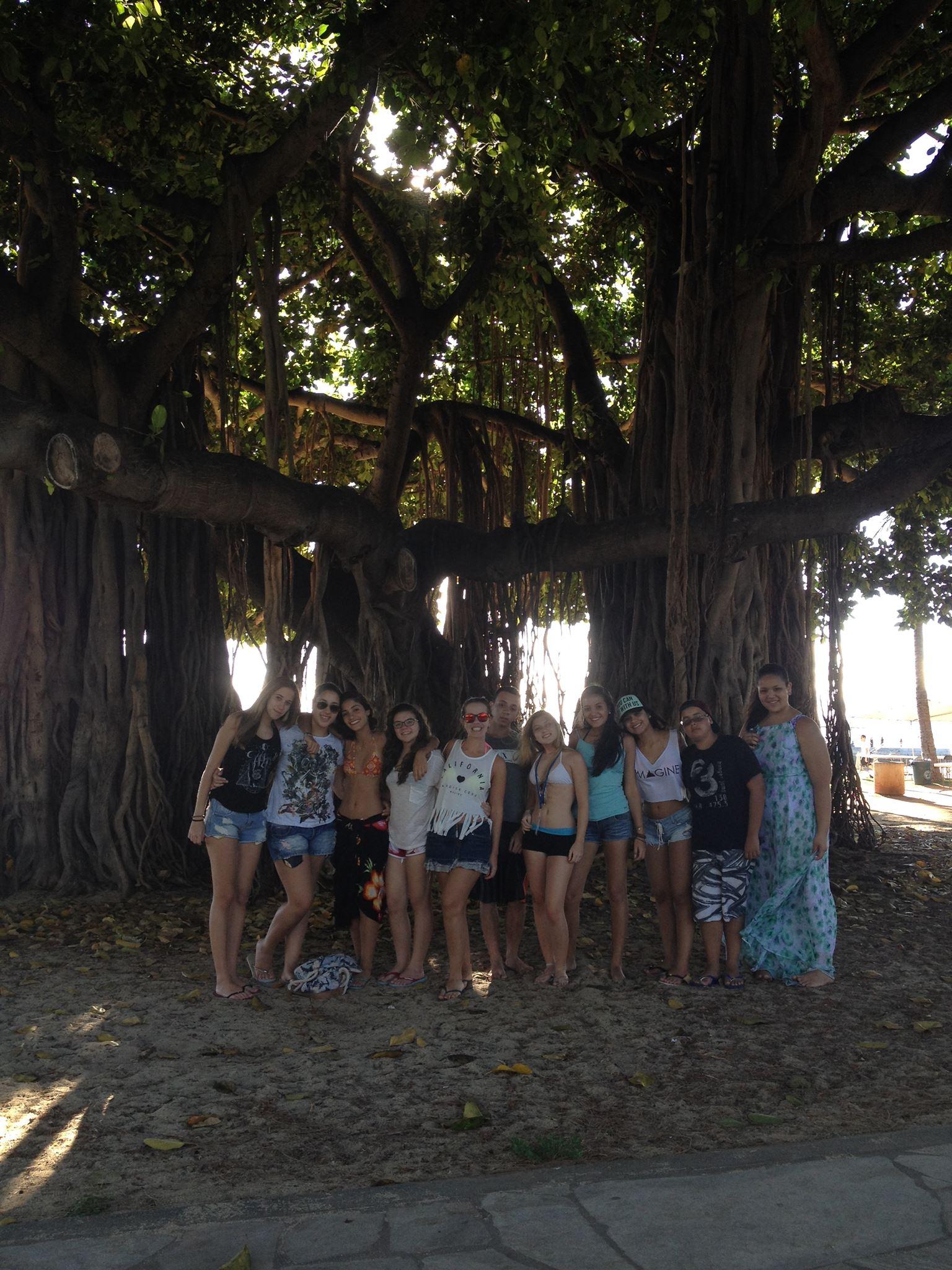 Waikiki Tree