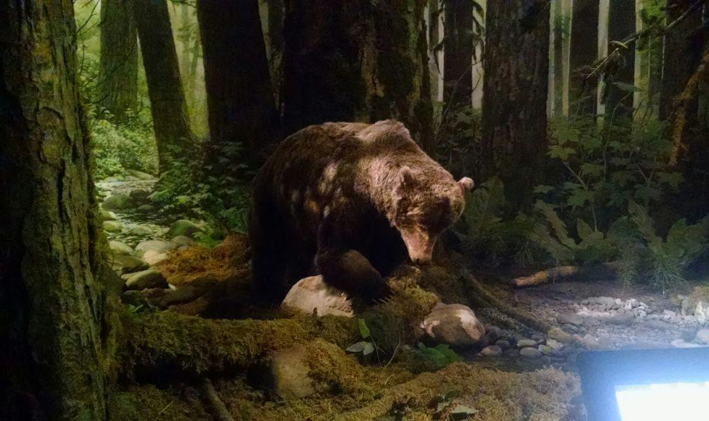 Quase deu pra acreditar que esse urso do Royal BC Museum era de verdade!!