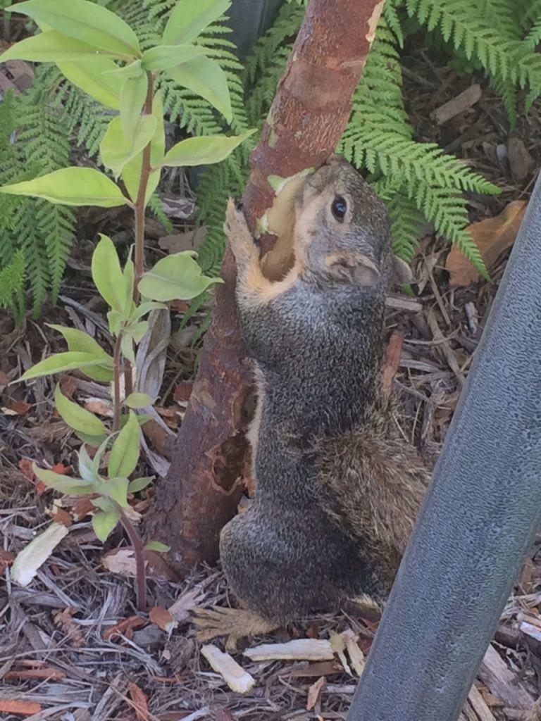 Esquilo!!!