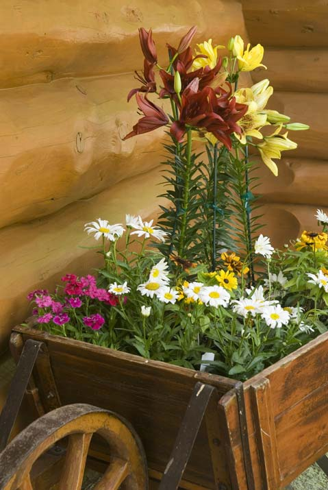 Decorative Flower Pot by the Cabin's Corner