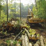 Clearing Lot for Building | Wisconsin Log Homes Photo