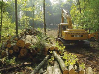 Clearing the Building Lot | Photo by: Wisconsin Log Homes