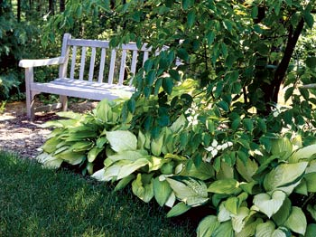 Designing A Shade Garden dappled shade shade garden plans smart design tips and ideas for a shaded garden Shade Gardens 4 Steps To A Perfect Shade Garden Design
