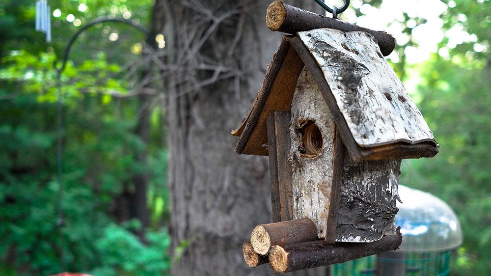 Bird Feeding Basics: How to Feed Birds