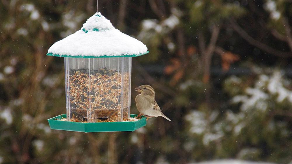 Bird feeder options
