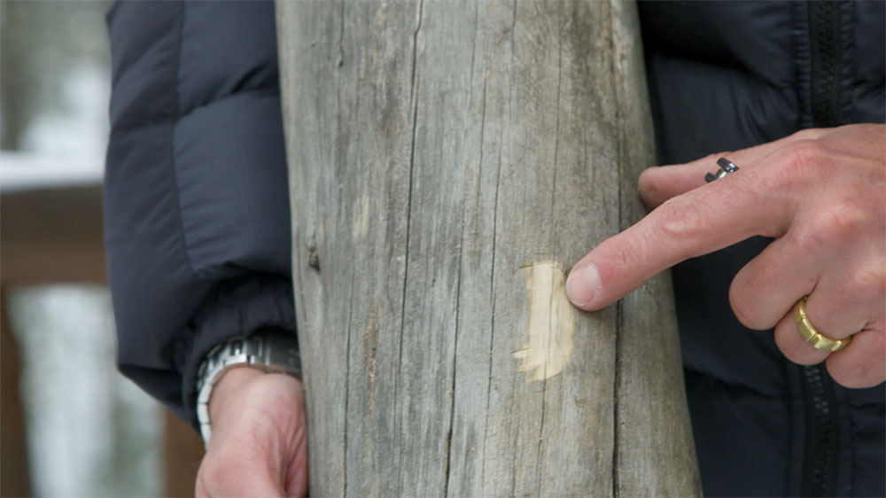 Degraded Wood? Here's How to Fix It
