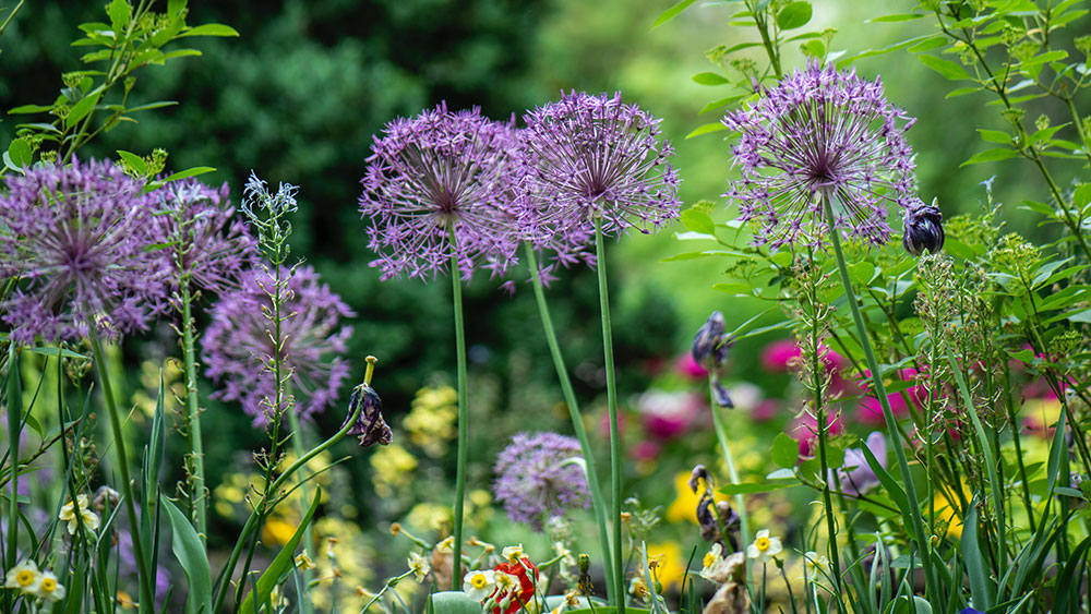 Your Seasonal Garden Checklist