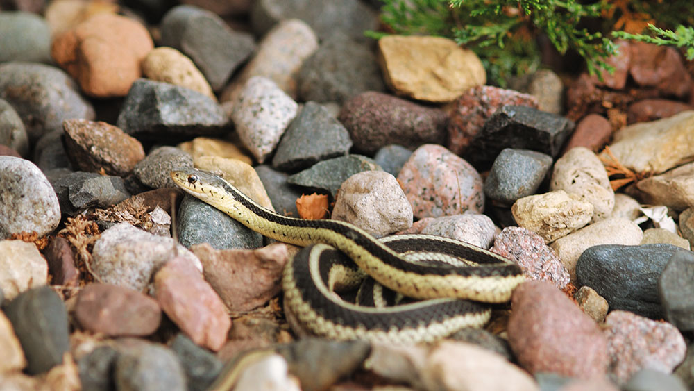 How to Deal with Snakes at the Cabin