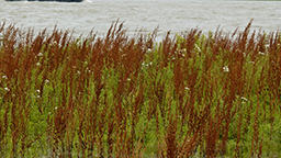 lake weed control