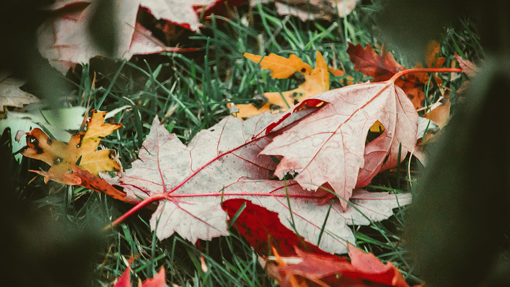 Your Fall Yard Maintenance Checklist