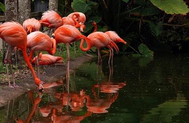 Flamingo21 34ffce695056b3a 34ffd31f 5056 b3a8 497f6e603264e4b2