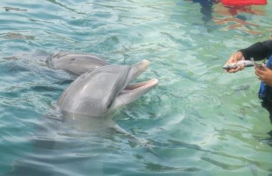Grand bahama dolphin encounter