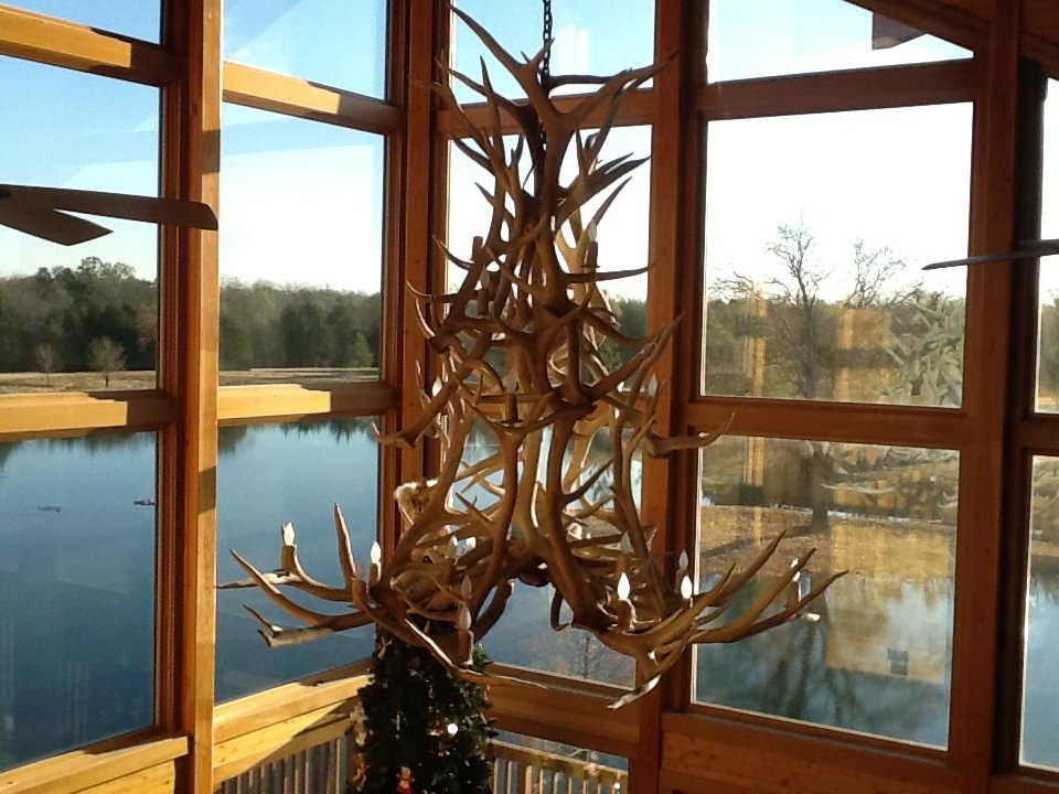 antler chandelier windows