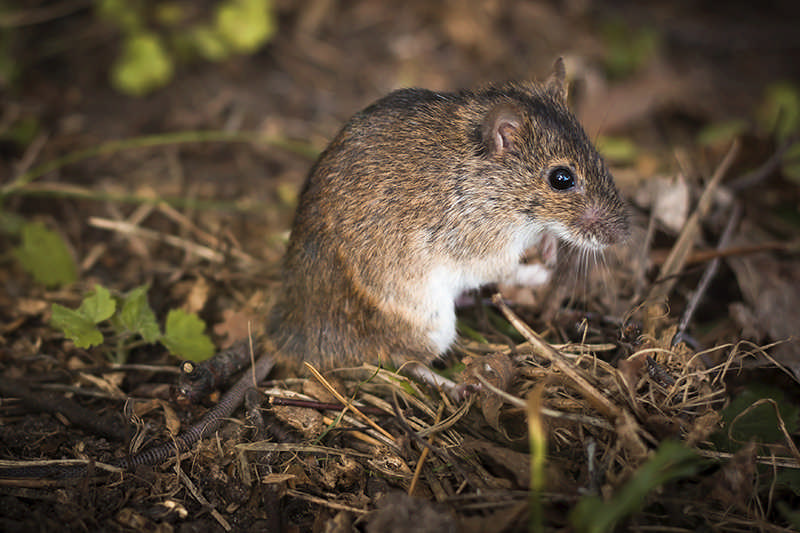 Cabin Closing Tips for Critter Control